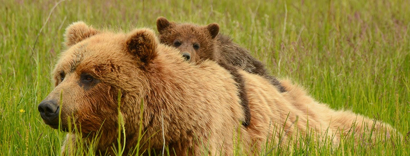 Admiralty Island Fortress of the Bears Kayak with Alaska Shore Tours