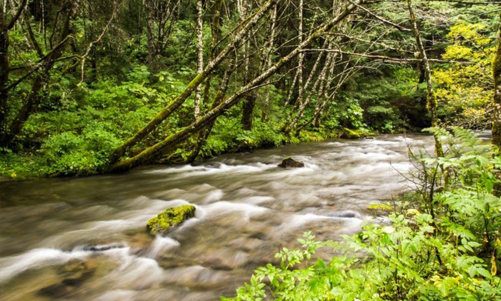 Gold Panning & Salmon Bake with Alaska Shore Tours
