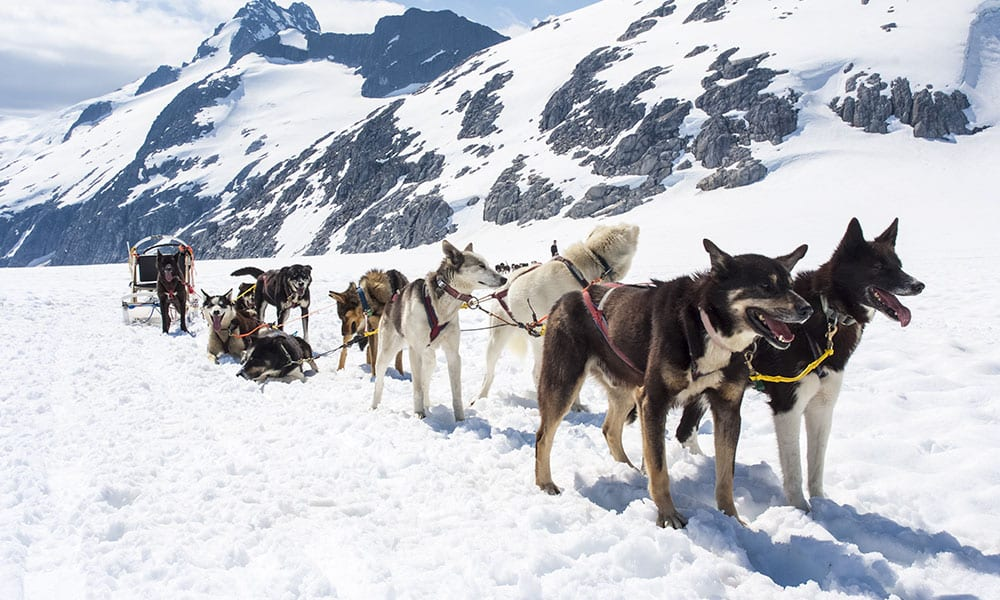 Helicopter Dogsledding with Extra Landing