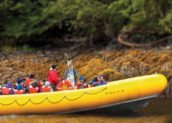 Rainforest Island Adventure with Alaska Shore Tours