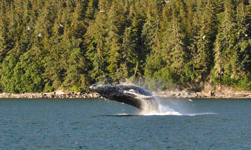Juneau Whale Watching Tours