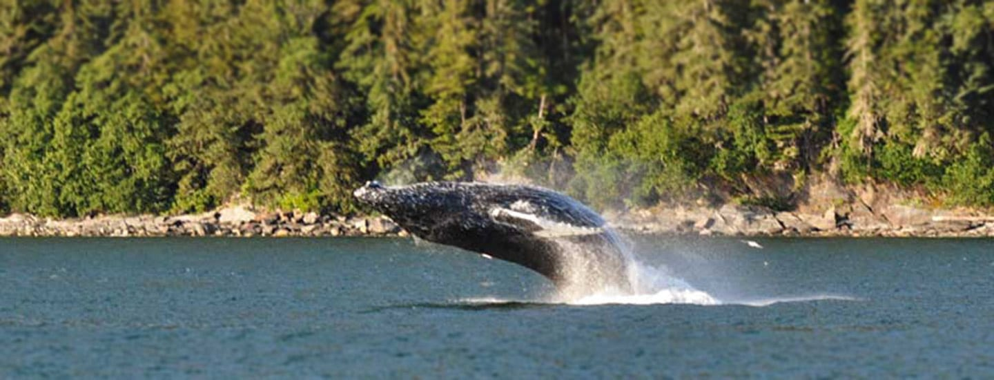 Whale Watching Tour with Alaska Shore Tours