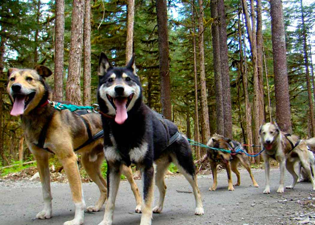 Private Emerald Lake and Dogsled Tour
