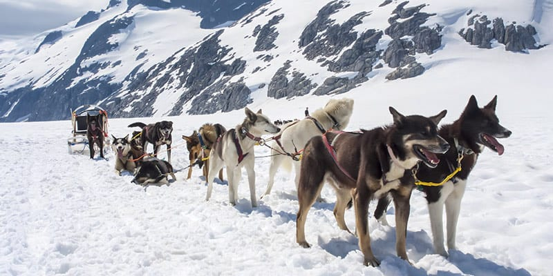 Helicopter Dogsled Alaska Family Tours