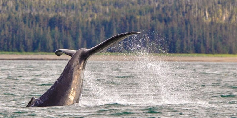 Juneau Whale Watching Alaska Family Tours