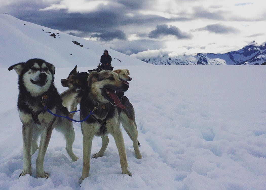 Skagway Helicopter and Dogsled Excursion with Alaska Shore Tours