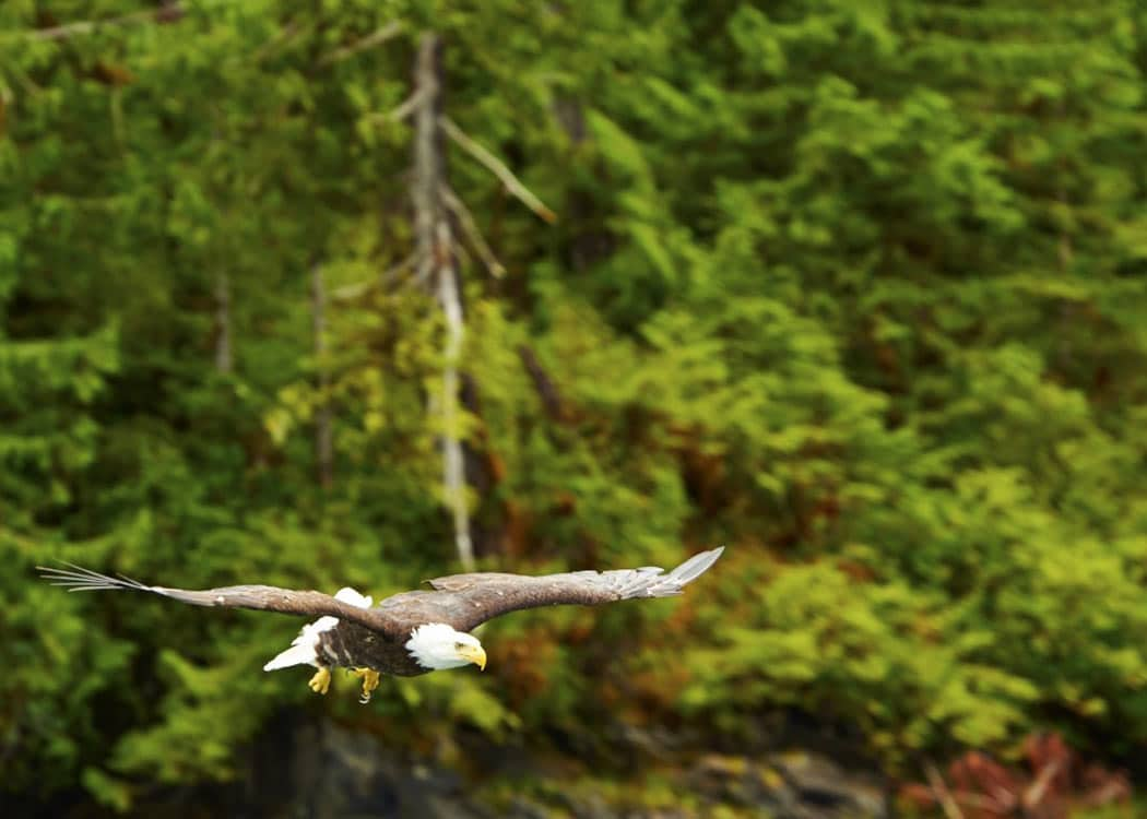 Alaska Lodge Adventure & Seafeast with Alaska Shore Tours