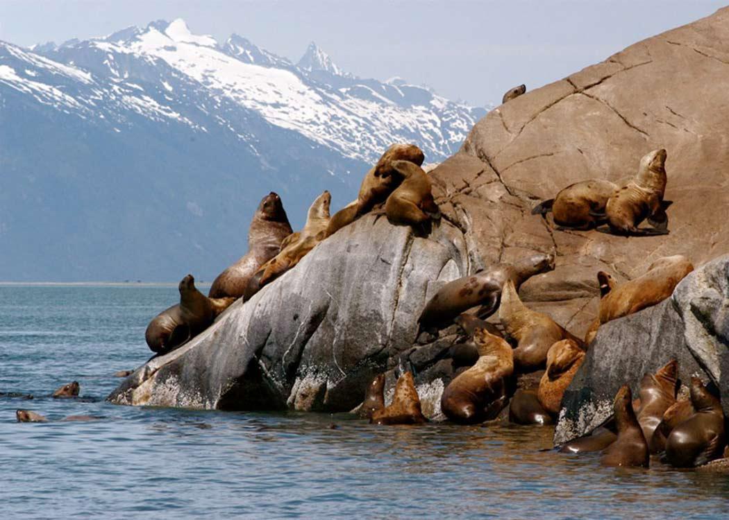 Glacier point ATV Exploration with Alaska Shore Tours