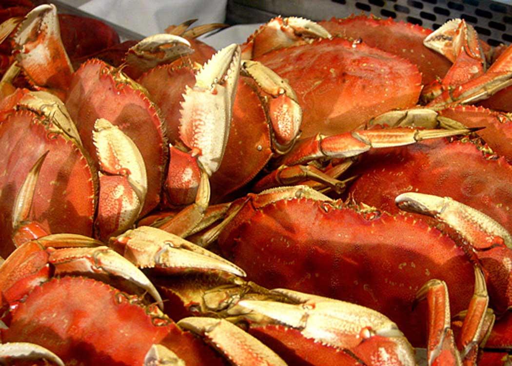 Rainforest Sanctuary and Crab Feast with Alaska Shore Tours