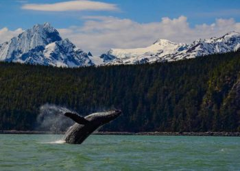 My Alaska Travel Tips: How to Get the Perfect Picture