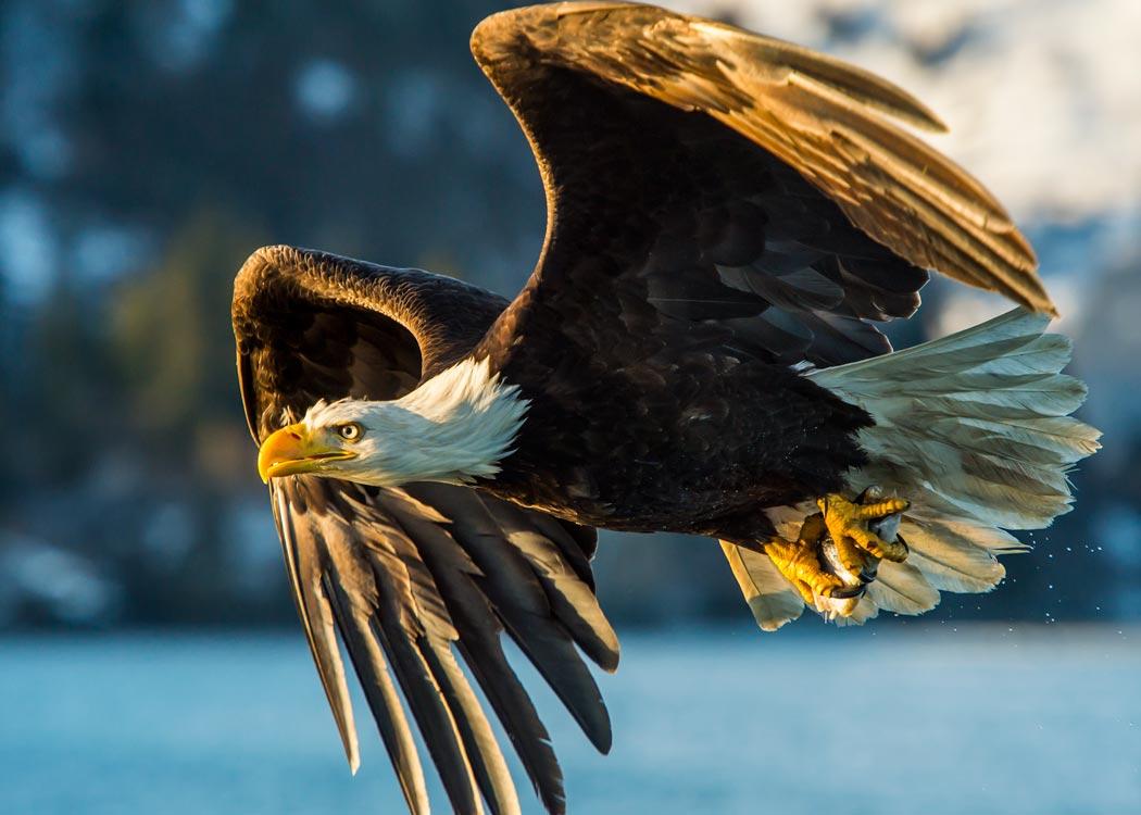 Hovercraft Eco Adventure and Wildlife Viewing Tour with Alaska Shore Tours