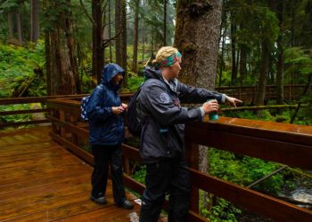 Black Bear & Wildlife Exploration with Alaska Shore Tours