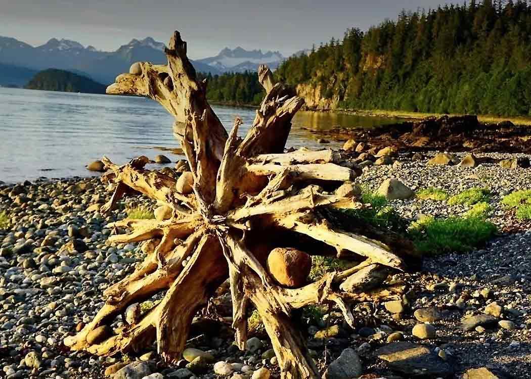 Photography Segway Safari with Alaska Shore Tours