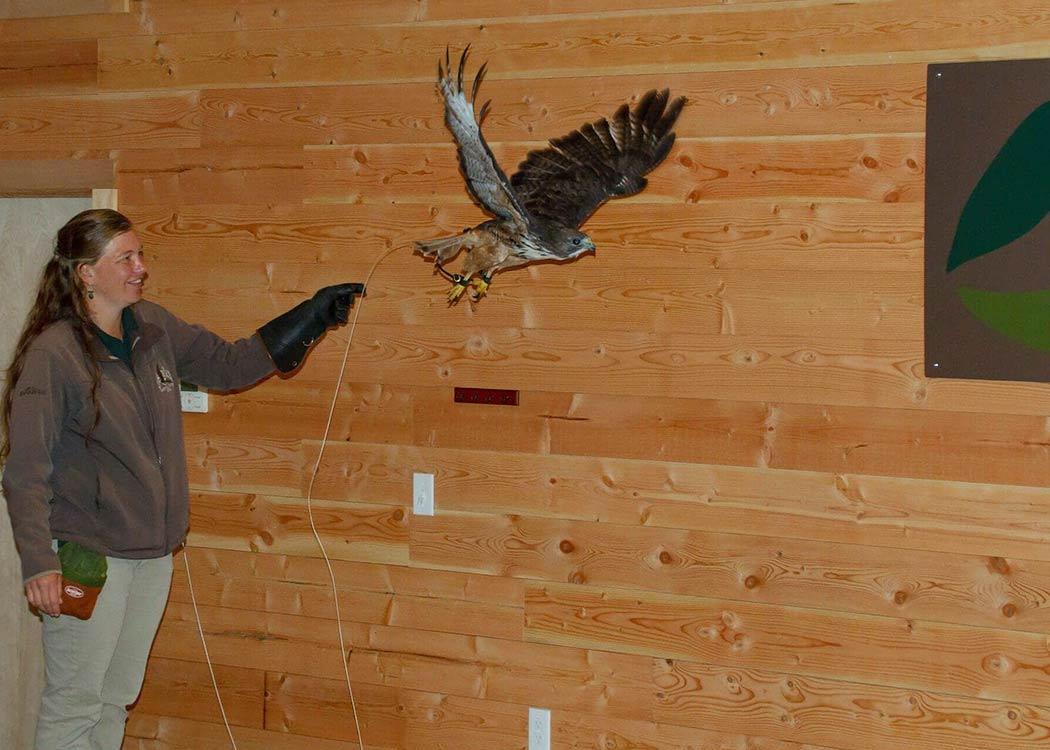 Eagles, Raptors & Rainforest Experience with Alaska Shore Tours