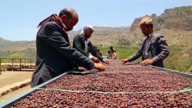 صورة البن .. سفير اليمن (مبادرة طريق البن اليمني)