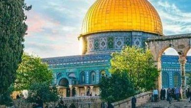صورة نحبك يافلسطين