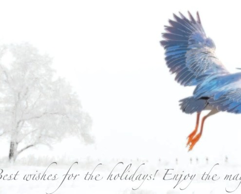 ALATIS et son équipe vous souhaitent de bonnes fêtes et vous présentent ses meilleurs vœux pour 2021