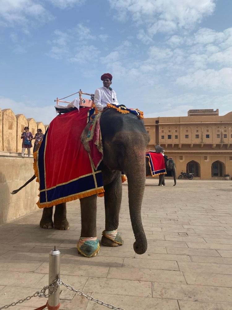 Elephant at Amber Fort, Jaipur