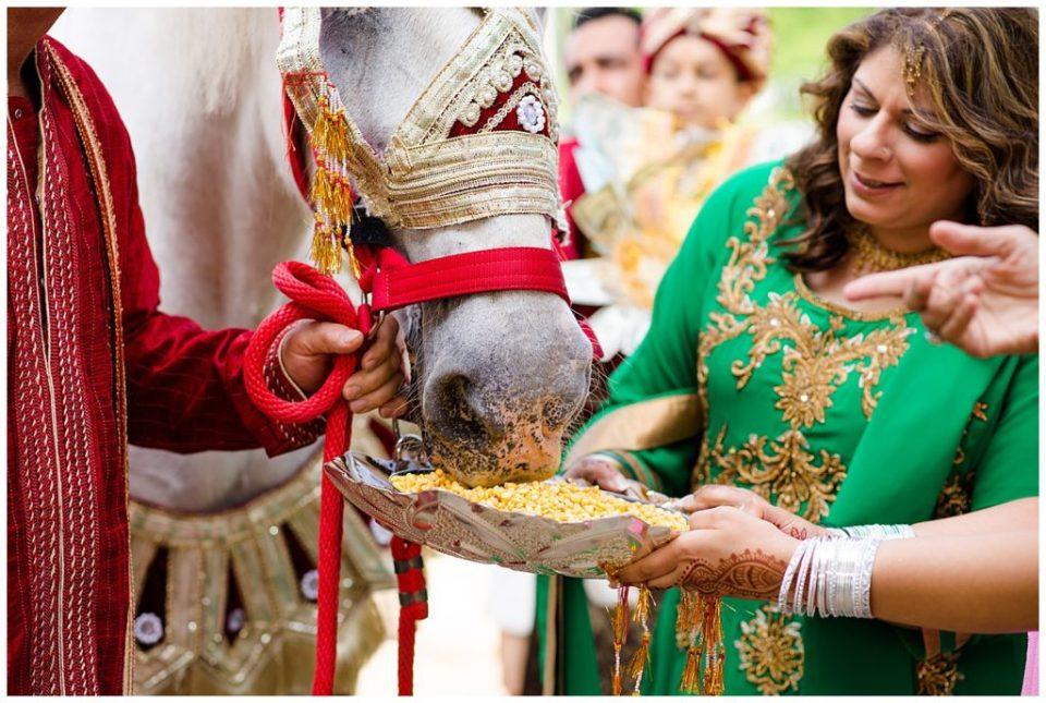 sister of groom feeding white horse for baraat
