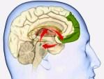 alba-calleja-psicologa-psicologos-en-gijon-psicologa-gijon-sustancias-cerebro.jpg