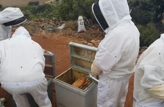 Diez vecinos de Lezuza finalizan el Taller de Empleo sobre Apicultura