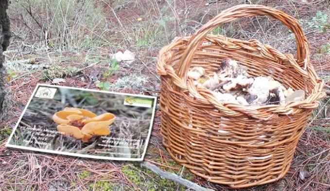 Jornadas Micológicas para dar la bienvenida al otoño albaceteño