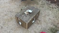 destrozo colonia felina 2