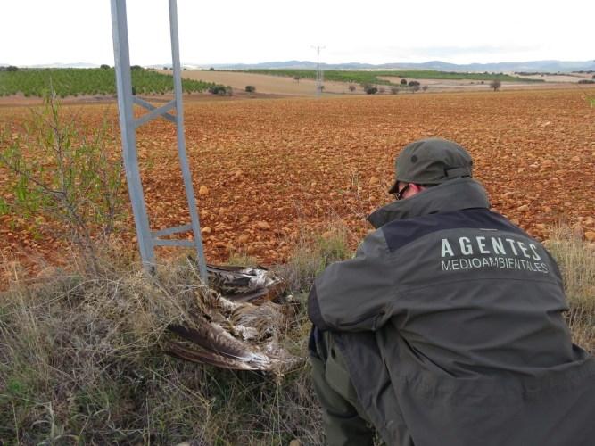 Hallan más de una treintena de aves muertas por electrocución en una finca de Albacete