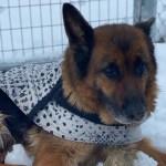 """""""Tenemos mucho por hacer, pero también muchos motivos para la esperanza"""": Albacete se vuelca con los animales durante el temporal"""