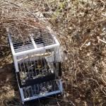 Denunciado en Higueruela por cazar jilgueros usando un móvil para imitar su canto y atraerlos a un palo con pegamento