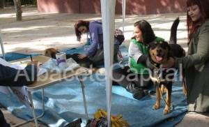 Espacio de masaje para perros, en la I Feria de Adopción de Albacete.