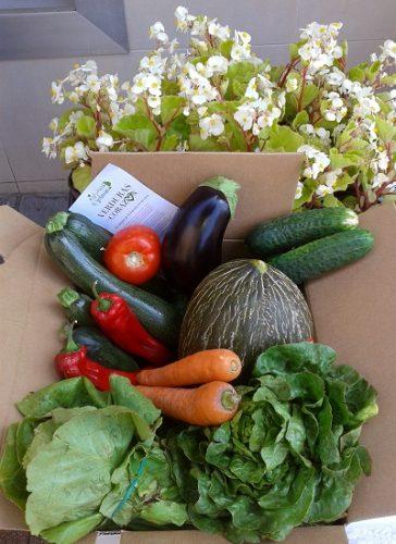 cesta_verduras