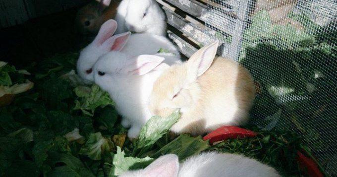 conejos2