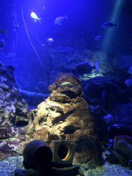 Koral dan karang