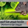فيروسات هنتا Hantavirus