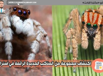 اكتشاف مجموعة من العناكب الجديدة الرائعة في أستراليا