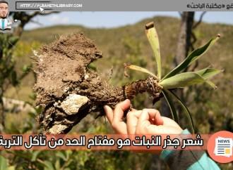 شعر جذر النبات هو مفتاح الحد من تآكل التربة