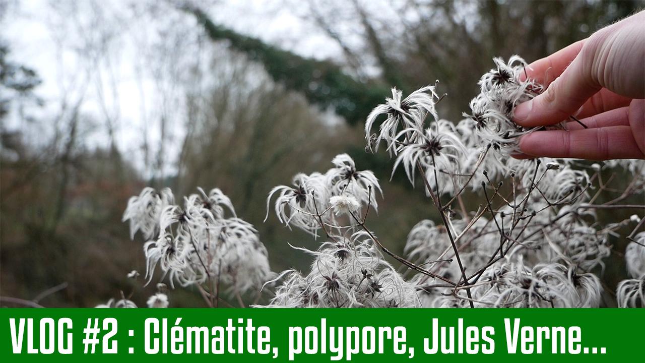 La Clématite et ses usages – Podcast S02E02 – Février 2019