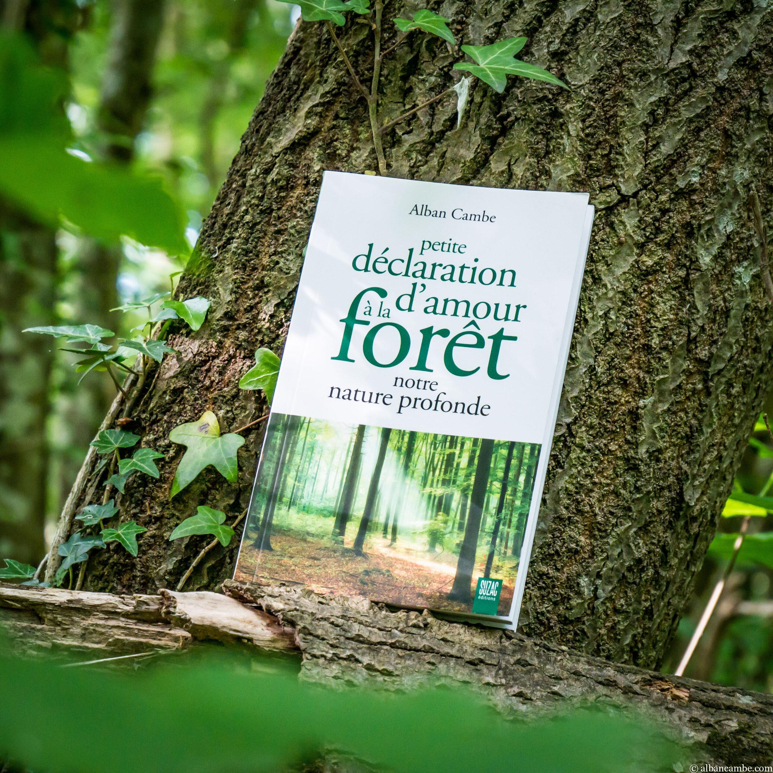 Les secrets de nos forêts dans «Petite Déclaration d'Amour à la Forêt – Notre nature profonde»