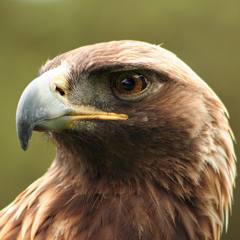 Weshalb nennt man Albanien »Land der Adler«?