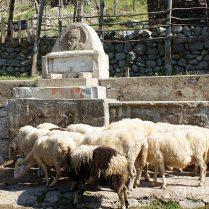 »Skanderbeg-Brunnen«