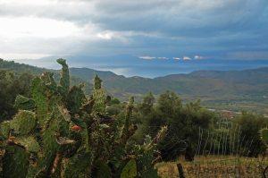 Kaktus & Gewitterwolken, Südalbanien