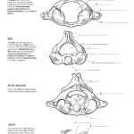 Anatomy Coloring Pages Coloring Pages 47 Phenomenal The Anatomy Coloring Book Pdf Picture