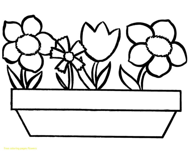 Coloring Pages Spring Northern Or Red Cardinal Coloring Page Spring Flower Pa