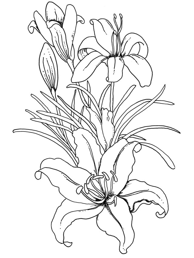 Flower Adult Coloring Pages Adult Coloring Pages Flowers Adult Coloring Pages Flowers Prints