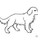 Golden Retriever Coloring Page Golden Retriever Puppy Coloring Page Free Printable Coloring Pages