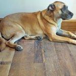 reclaimed engineered flooring home remodeling