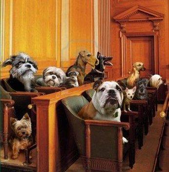 leis-estranha-mundo-cachorro