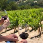 Barolo and Barbaresco wine tour 2 days last minute trip