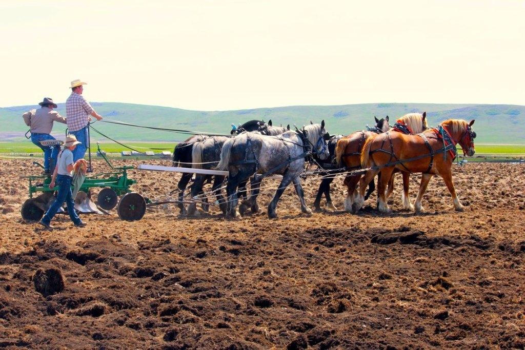 Pioneer Gang Plow – Alberta Carriage Supply